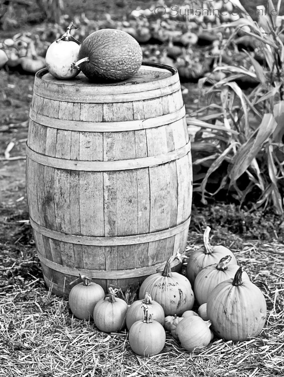 It's all about Pumpkins! 15