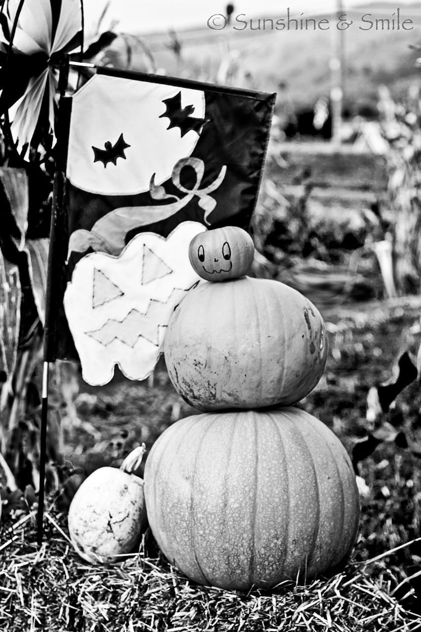 It's all about Pumpkins! 16
