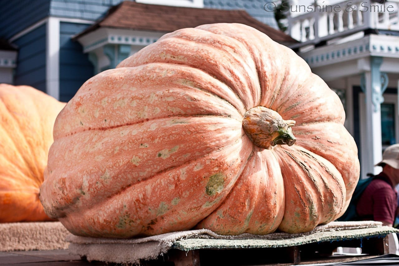 It's all about Pumpkins! 6