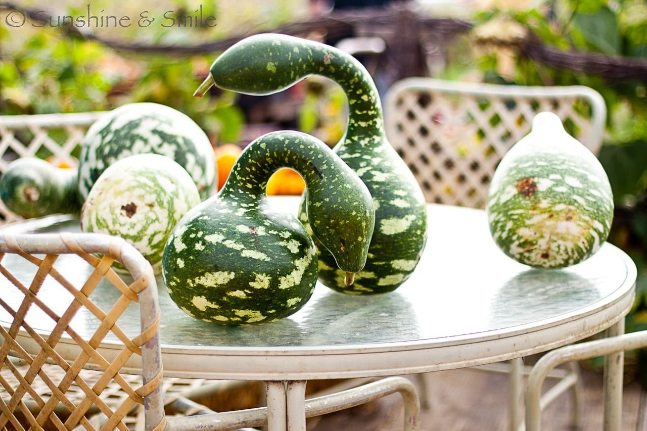 It's all about Pumpkins! 10