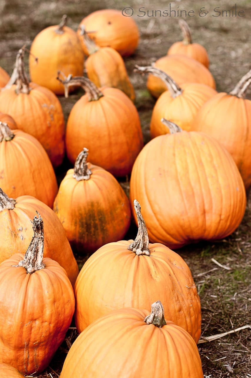 It's all about Pumpkins! 9