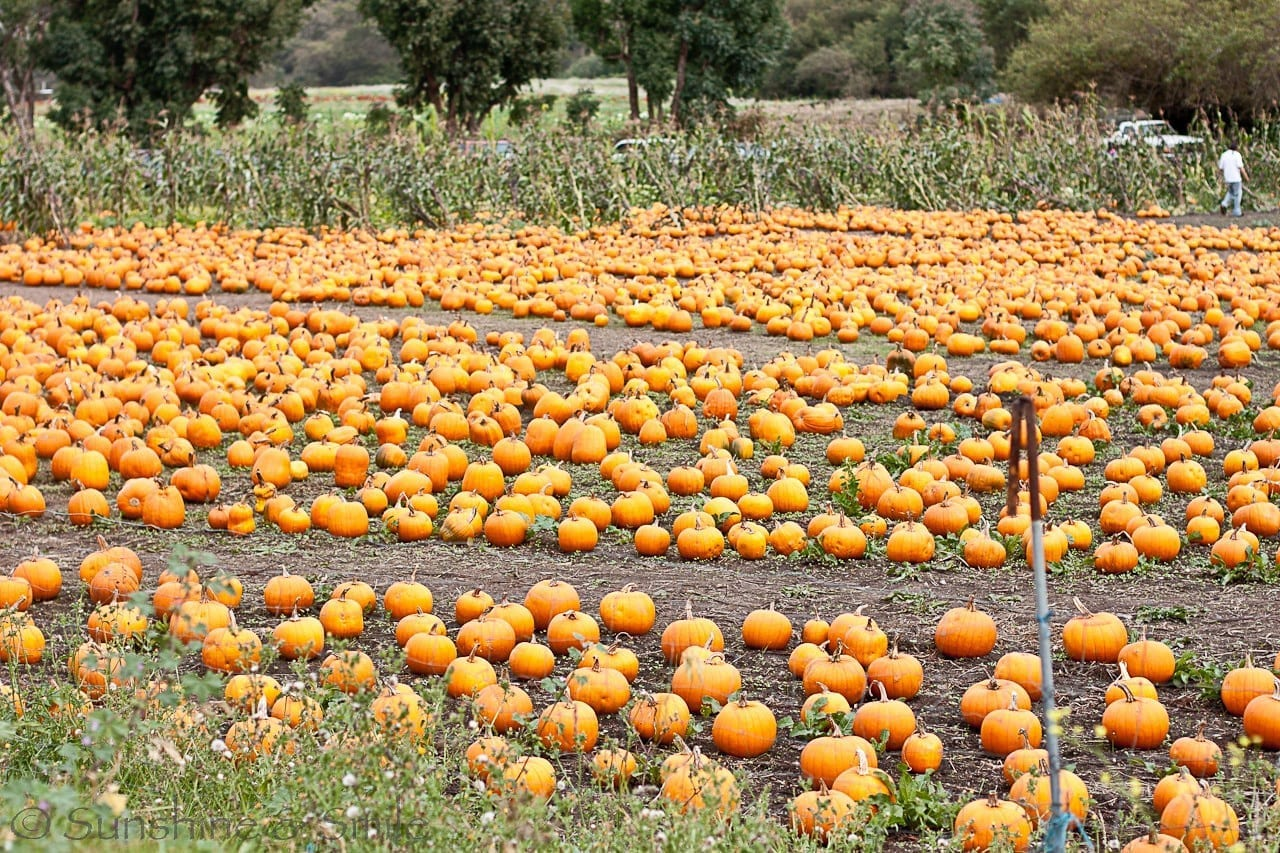 It's all about Pumpkins! 8